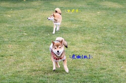 IMG_9360+AZUKI.jpg