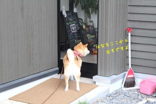 IMG_9376+AZUKII.jpg