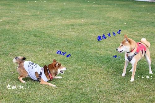 IMG_9391+AZUKII.jpg