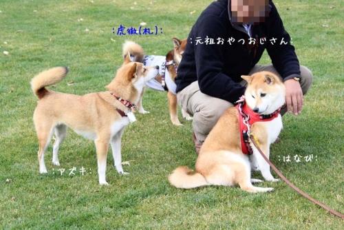 IMG_9397+AZUKI.jpg