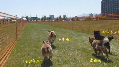 P1140117+AZUKI.jpg