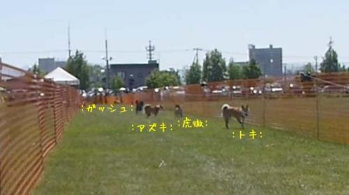 P1140121+AZUKI.jpg
