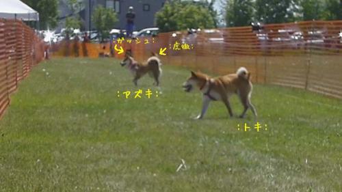 P1140122+AZUKI.jpg