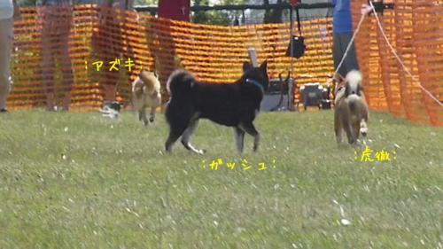 P1140132+AZUKI.jpg