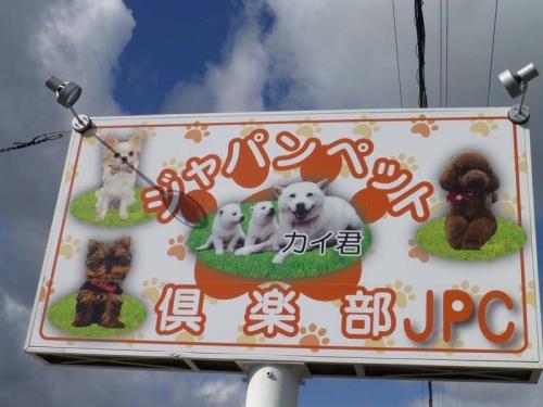 P1150391+AZUKI.jpg