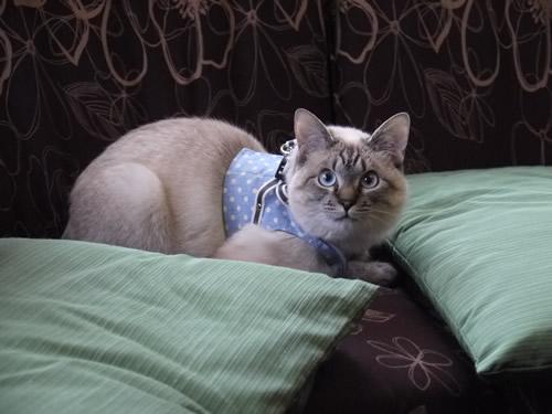 猫座りポーズ