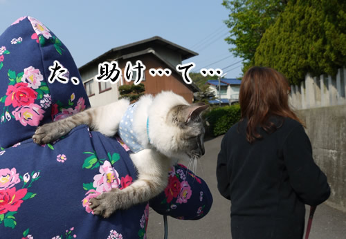 猫たすけ求む
