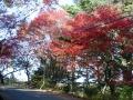141122摩耶山への道すがらの紅葉