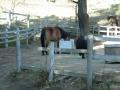 141122六甲山牧場の馬