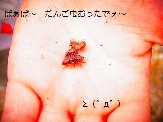 16武丈の桜3