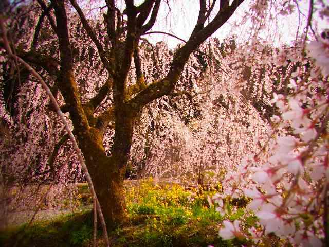 相野の花3
