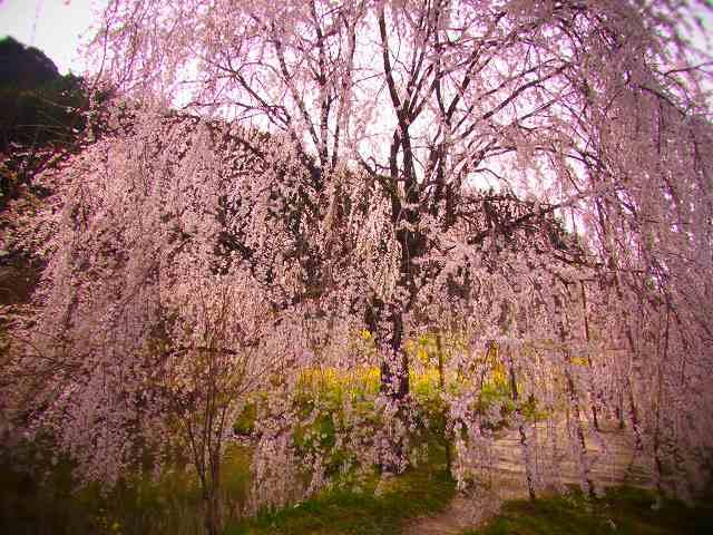 相野の花4
