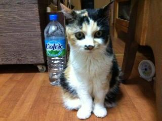 掃除を邪魔する猫