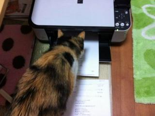 ブログを読む猫