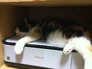 プリンターで涼を取る猫