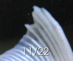 金魚 尾腐れ病 尾ぐされ病 グリーンFゴールドリキッド 20141125