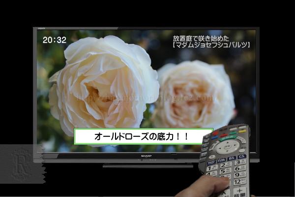 10_201411132120447fc.jpg
