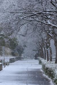 雪。_800