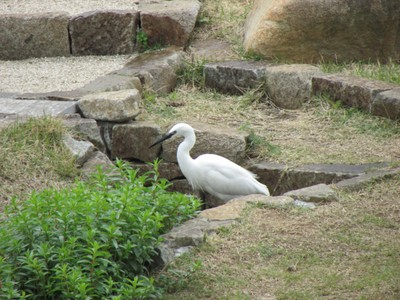 目黒天空園白鳥