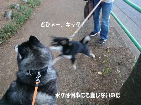 20130529_3.jpg
