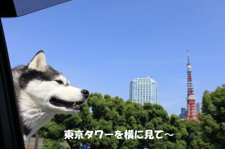 20130609_3.jpg