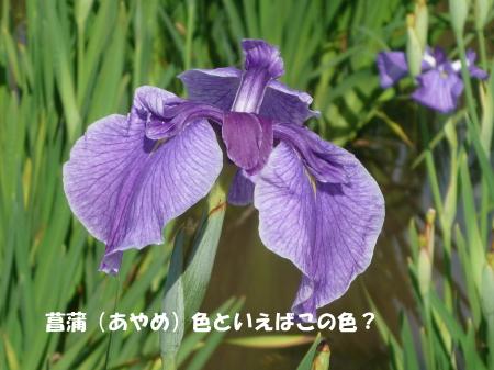 20130622_10.jpg