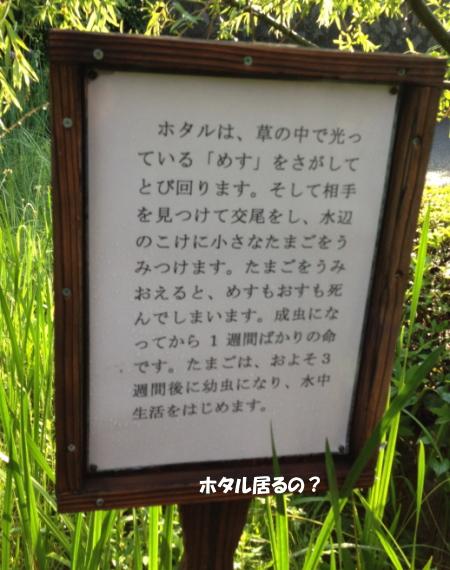 20130622_3.jpg