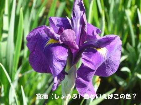 20130622_9.jpg