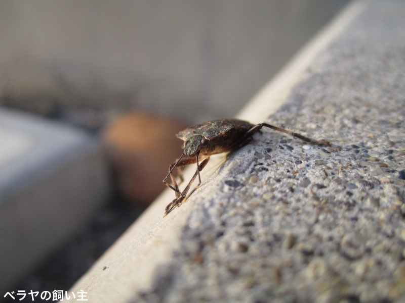 BNK-Bug-IMG_8410.jpg