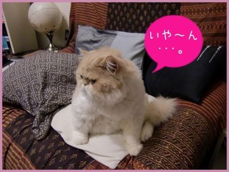 台湾波斯猫飯店