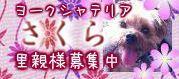 sakura_20130605221201.jpg