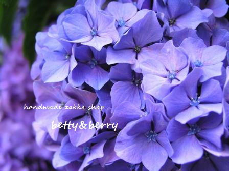 ha_147.jpg