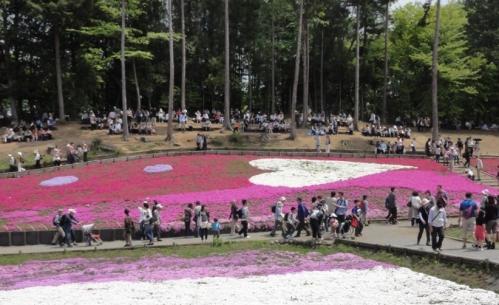 2013.4芝桜3