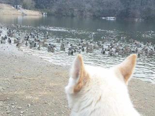 鳥いっぱい・・・