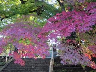 紅葉の神社 (2)