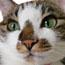 軽井沢BIRDIE看板猫ブログ