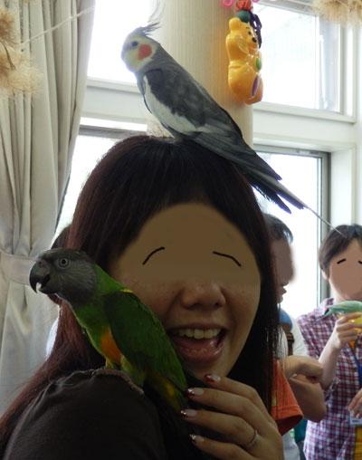 鳥バカ9チャッピ3