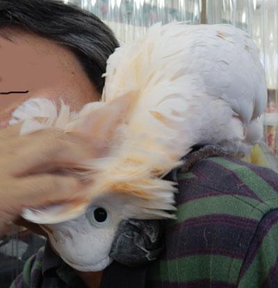 鳥バカ14らむちゃん2