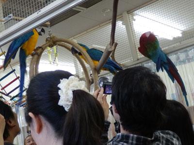 鳥バカ15コンゴウ