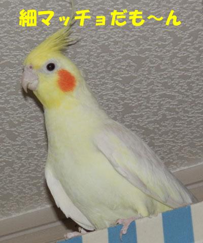 7_ノンちゃん