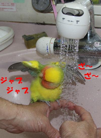 リコ水浴び2