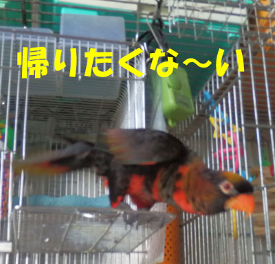 11_ピンナ3