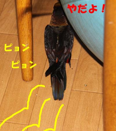12_ピンナ4