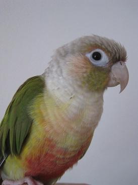 ビオラ 1