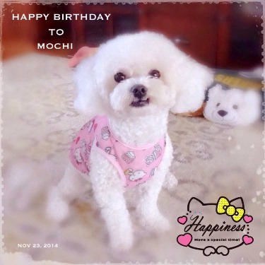 Happy Birthday to Mochi