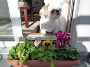 花とブラン(5)