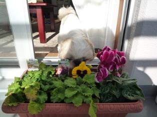 花とブラン(6)