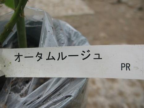 オータムルージュ (3)