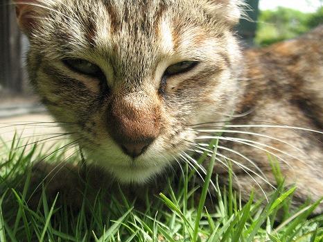 猫 (3)