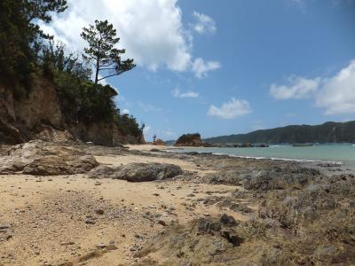 浜辺きれい